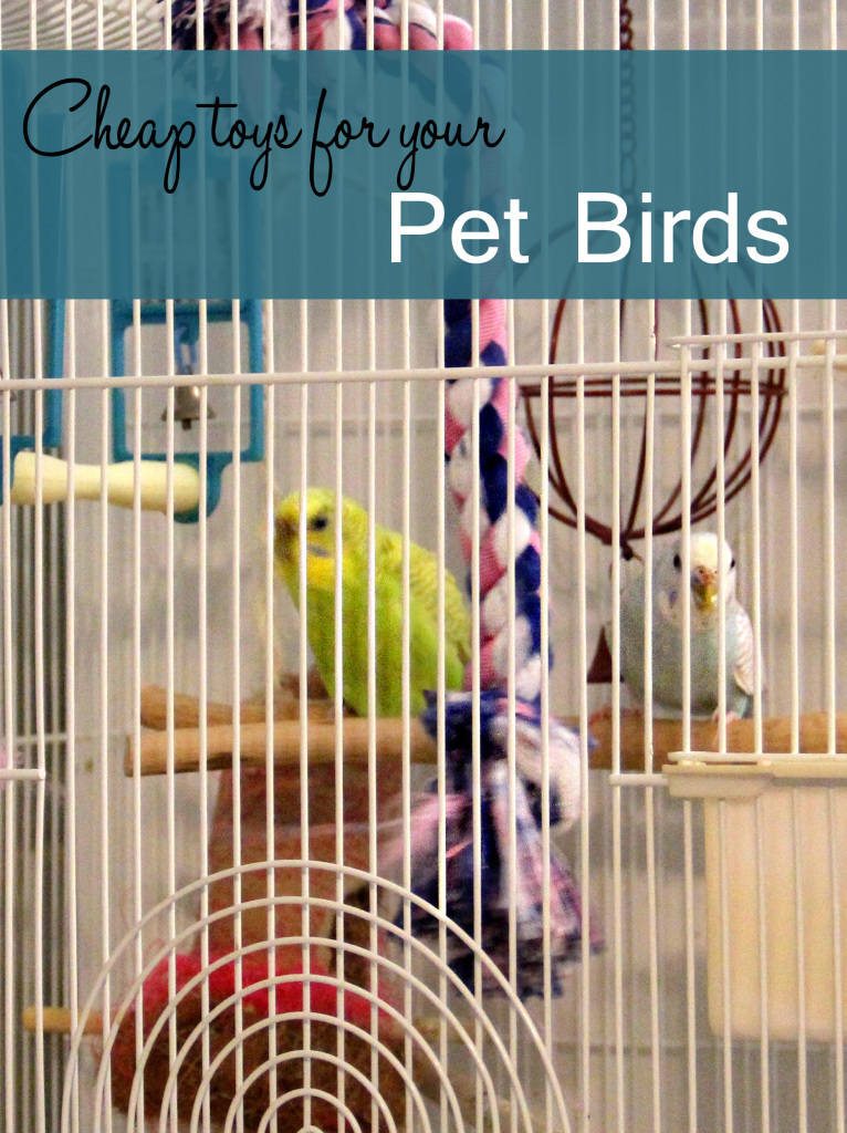 Discount Bird Toys : Cheap toys for pet birds sweet southern blue